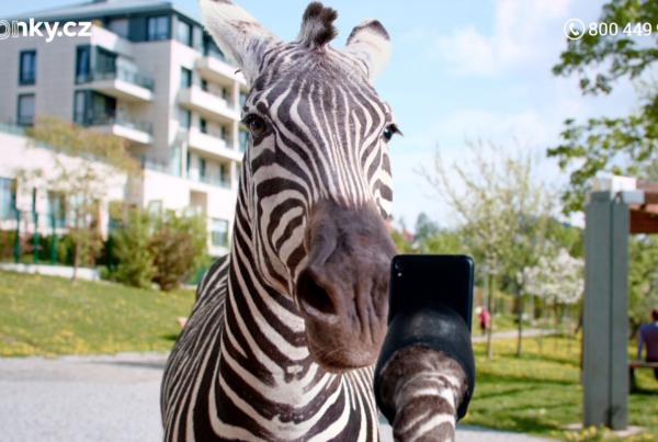 Zonky Zebra park 4movie studio