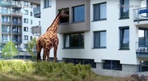 Zonky Žirafa 3D